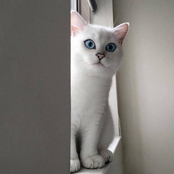 Самые красивые кошачьи глаза